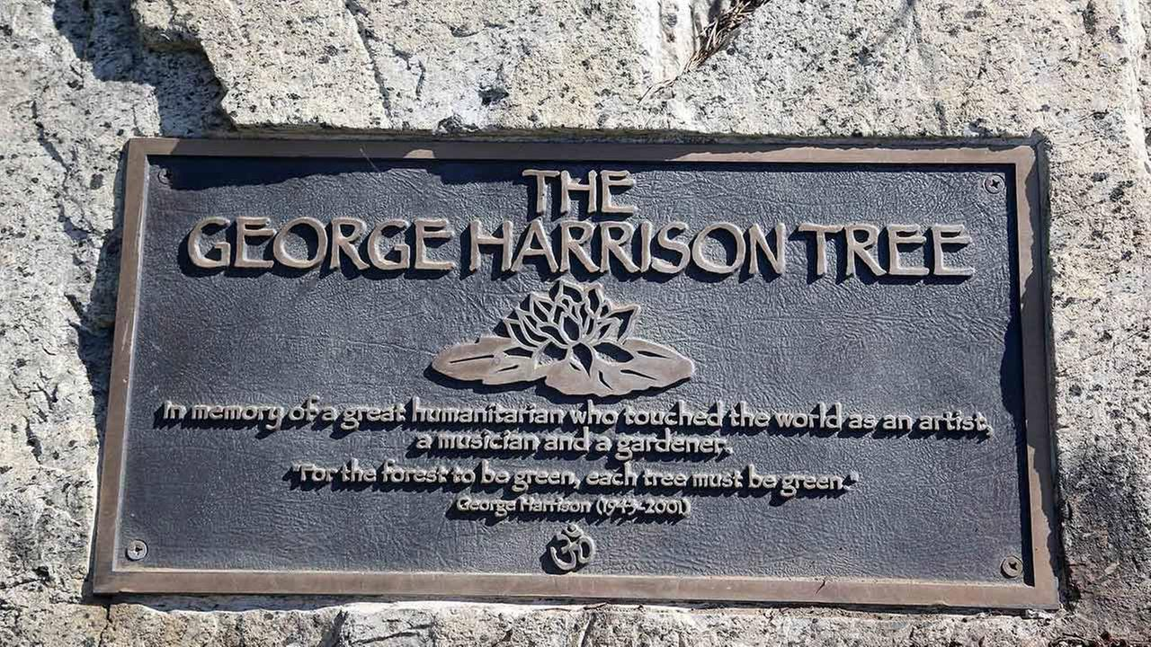 A plaque marks the place where a tree was planted in Los Angeles to honor former Beatle George Harrison in Griffith Park on Tuesday, July 22, 2014.