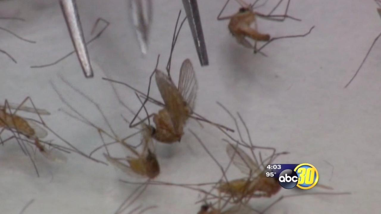 Kings Countys first West Nile virus case reported for 2014