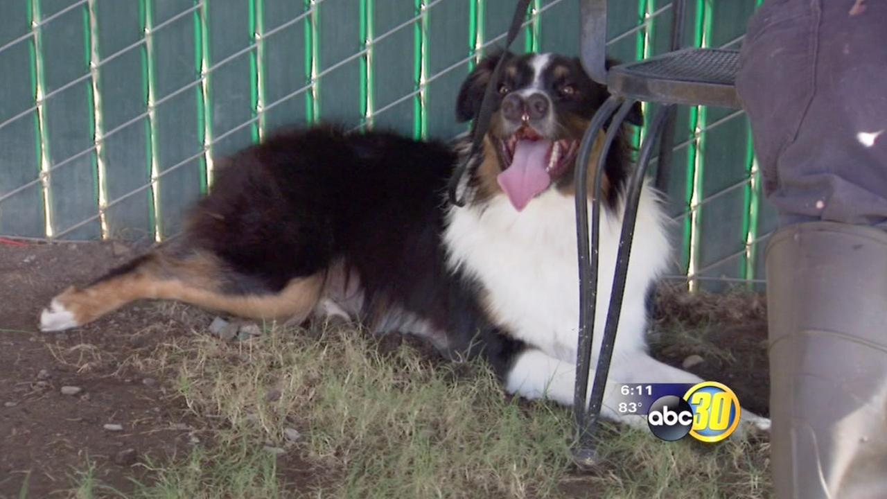Dog with 2 noses moved to NorCal rescue operation