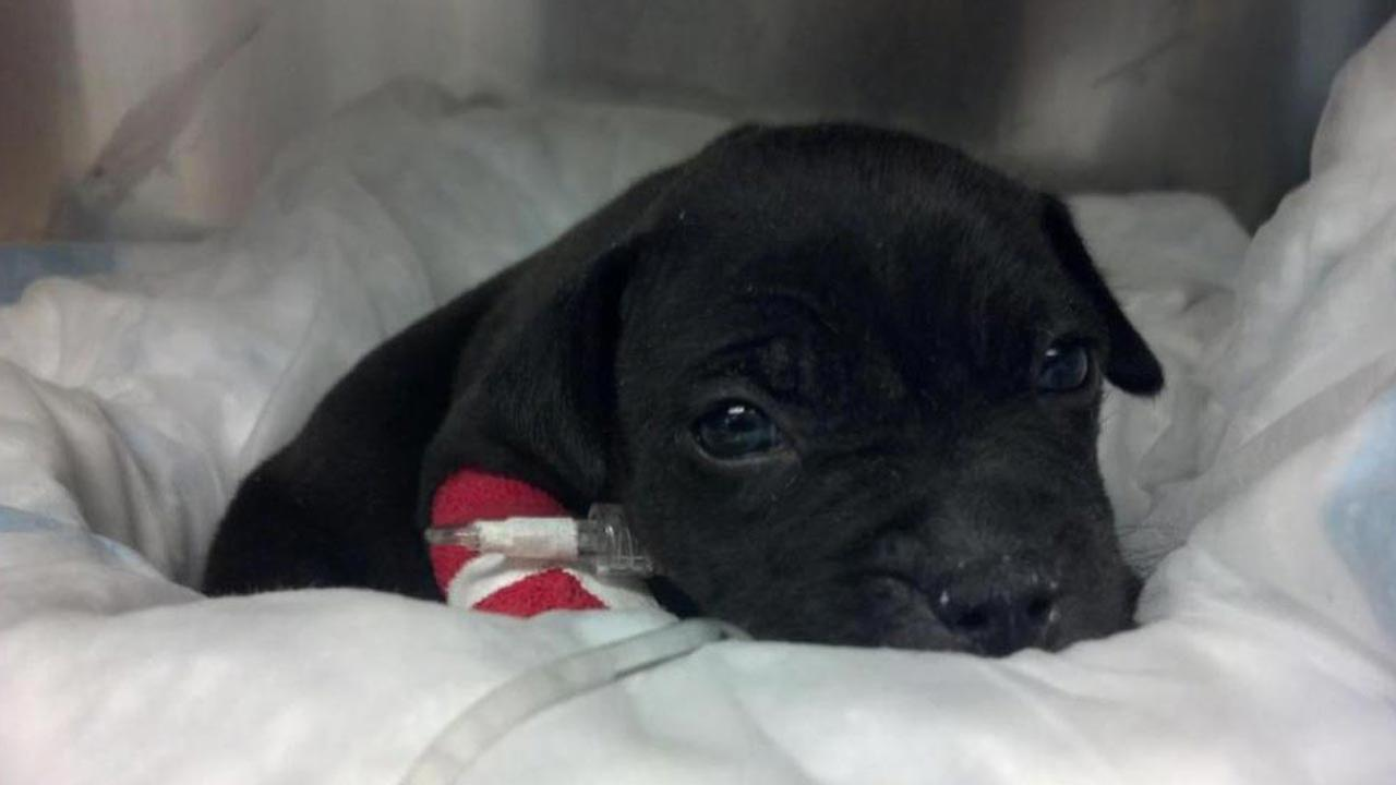Puppy found during Massachusetts drug bust