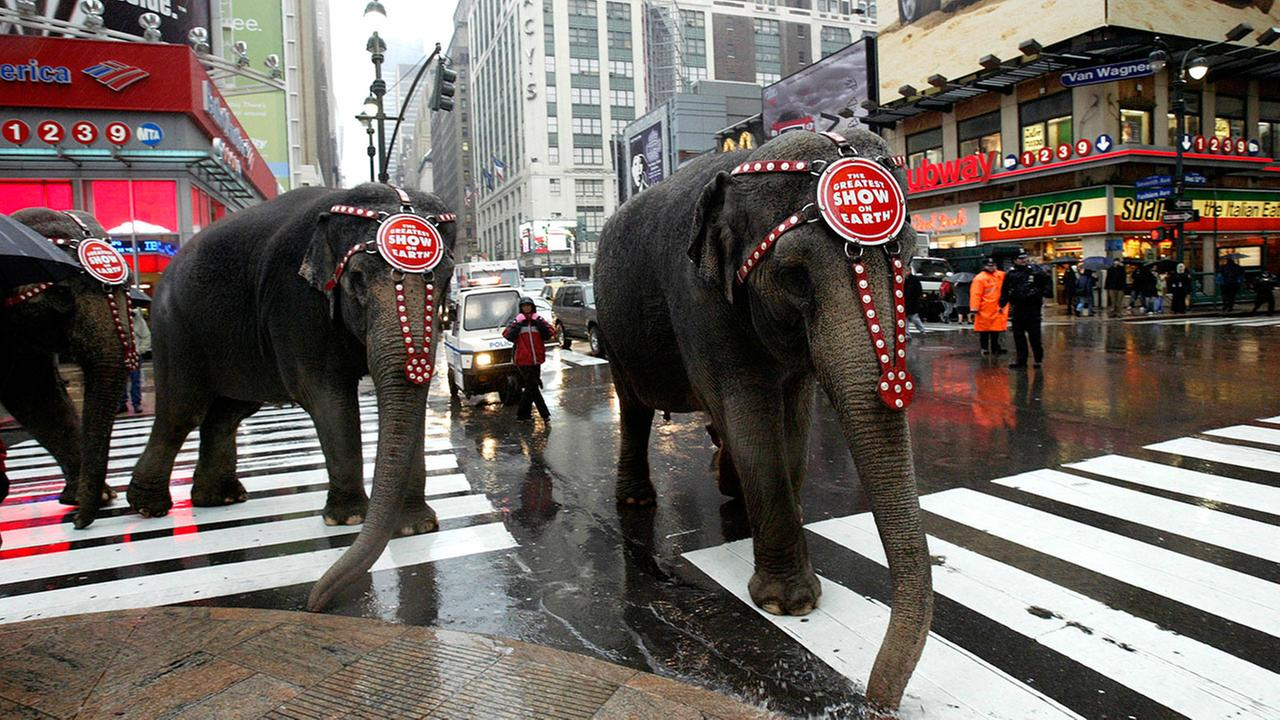 Two elephants from the Ringling Bros. and Barnum and Bailey Circus