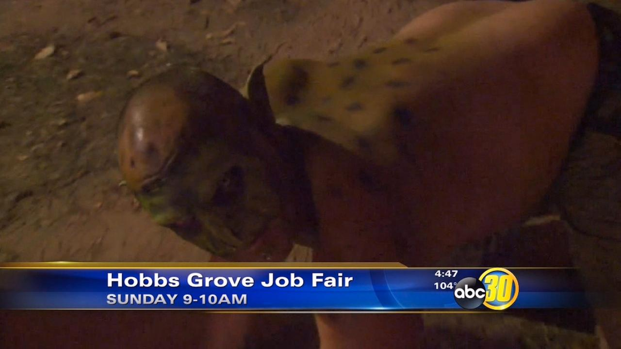 Hobbs Grove holding job fair in Sanger