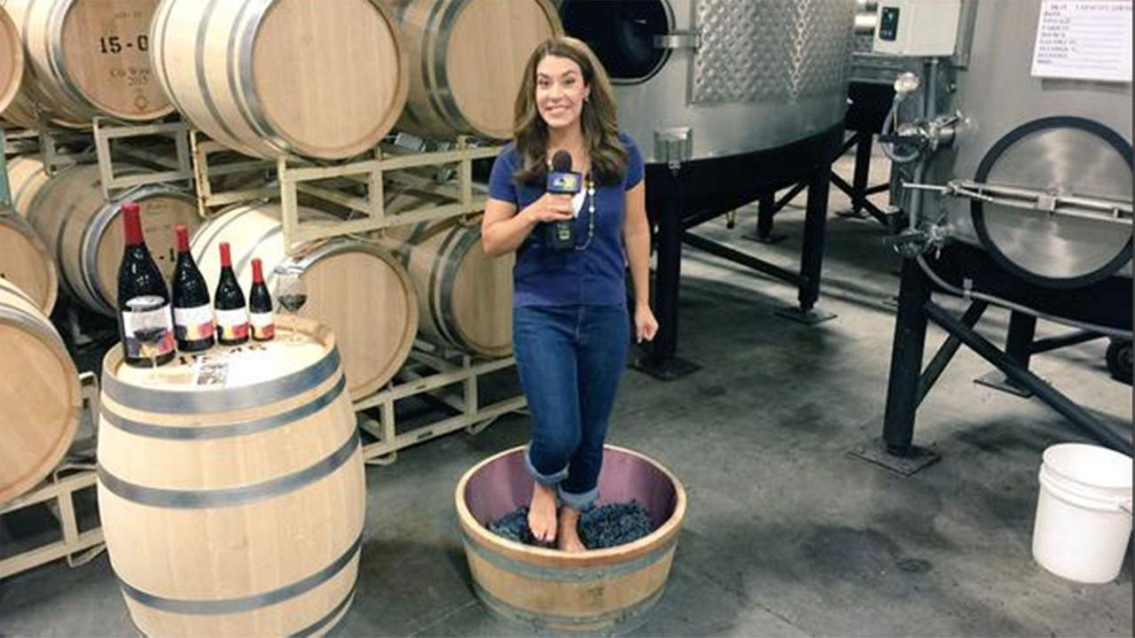 turning grapes into wine Turning grapes into wine wine making is a combination of art and science there are basically four steps, from when the grapes have been harvested [.