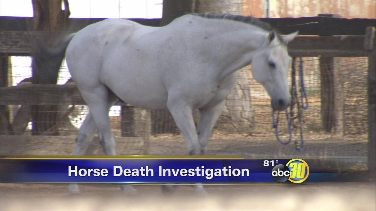 Horses dead, dozens ill at Fresno County farm after possible feed mixup
