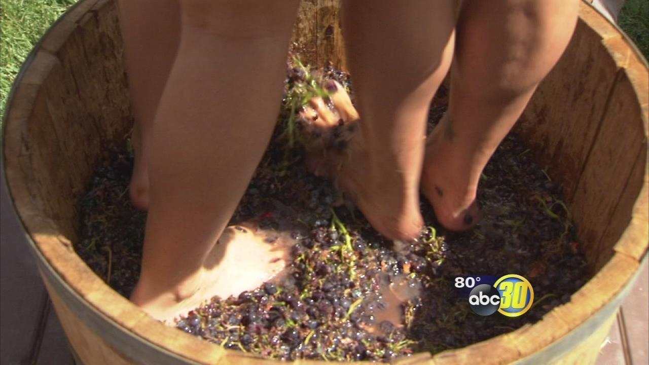 Cru Winery holds Grape Stomp event
