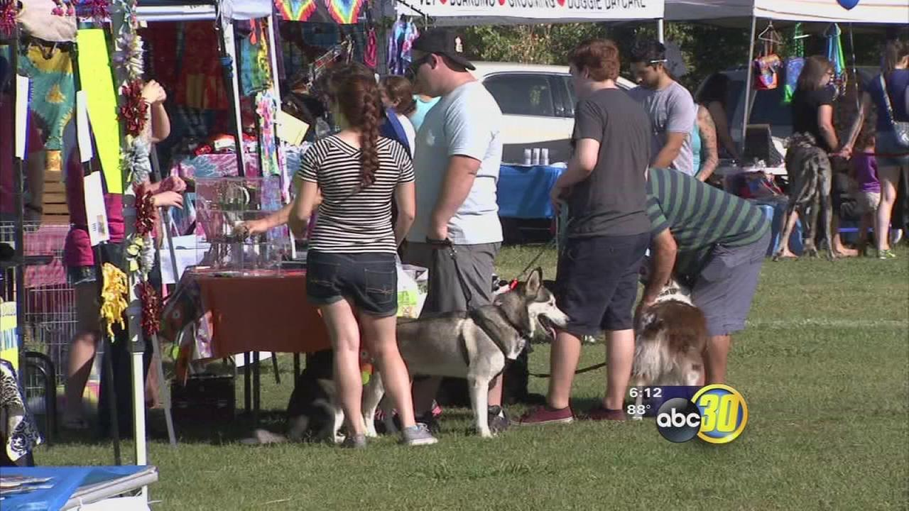 Wiggle Waggle Walk held to raise money for no-kill shelter