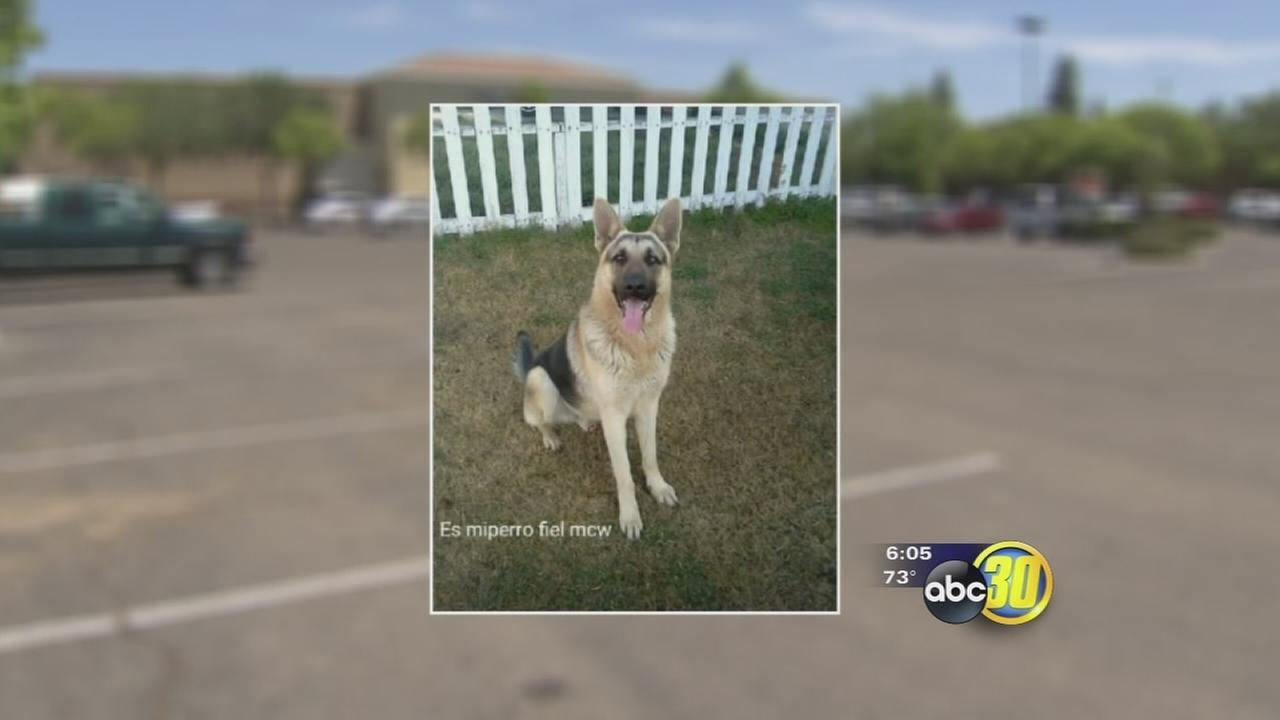 Sad ending as Fresno County man punished for animal cruelty