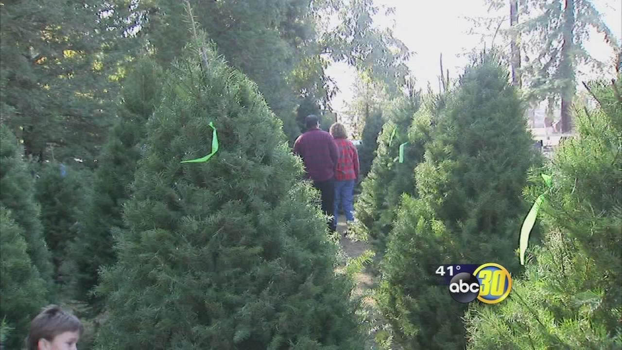 Valley Families Hunt For Christmas Trees