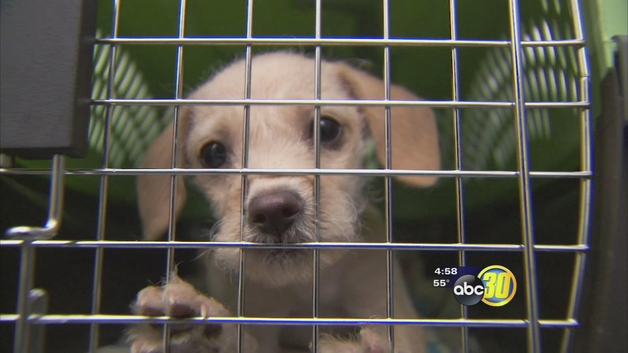 Local organization going to great lengths to find homes for animals across the nation