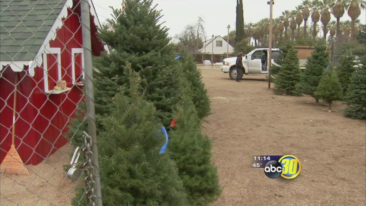 South Valley Christmas tree drop off locations