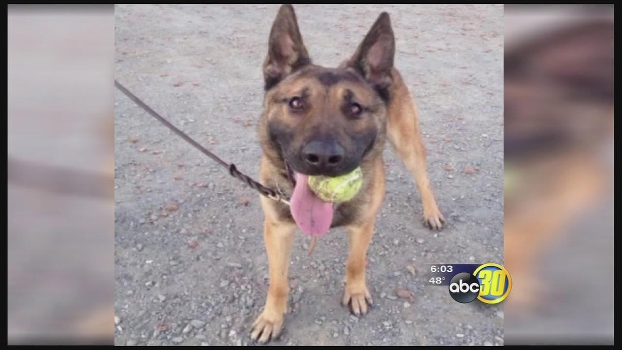 Injured officer raises funds to reunite with K9 partner