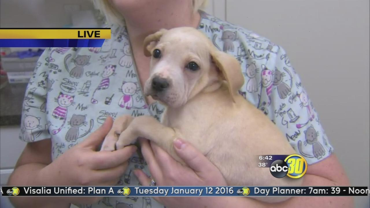 Valley Animal Center: Happy Neuter Year