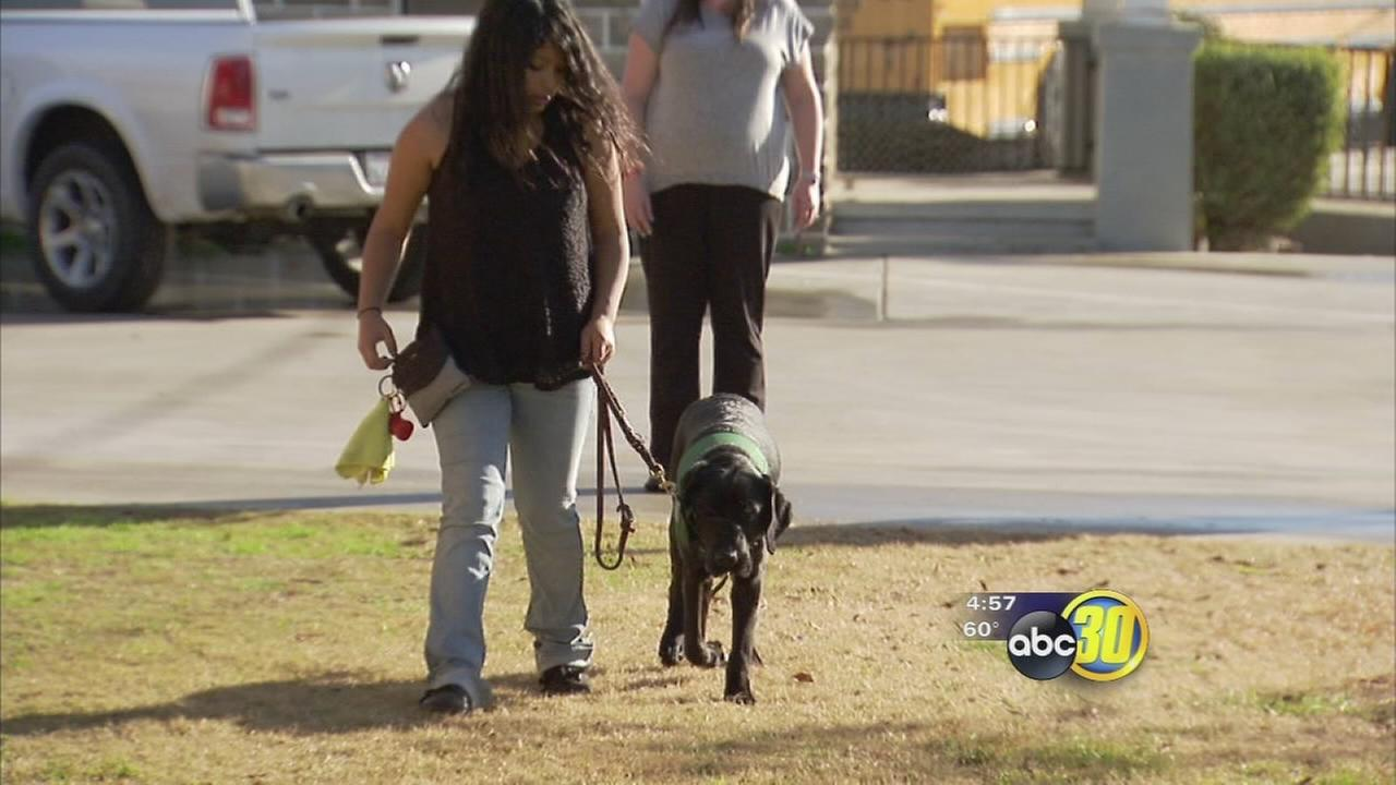 Dinuba High students give back to the community with school program to train guide dogs