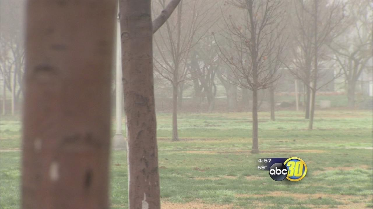 Fresno State looking to remove more than 100 trees due to drought wet weather