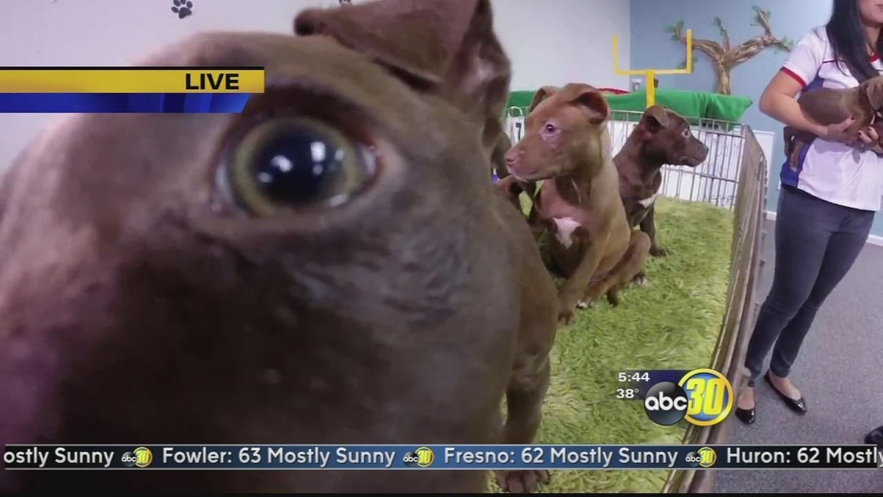 Canines engage in a battle of cuteness at the Central Valley Puppy Bowl