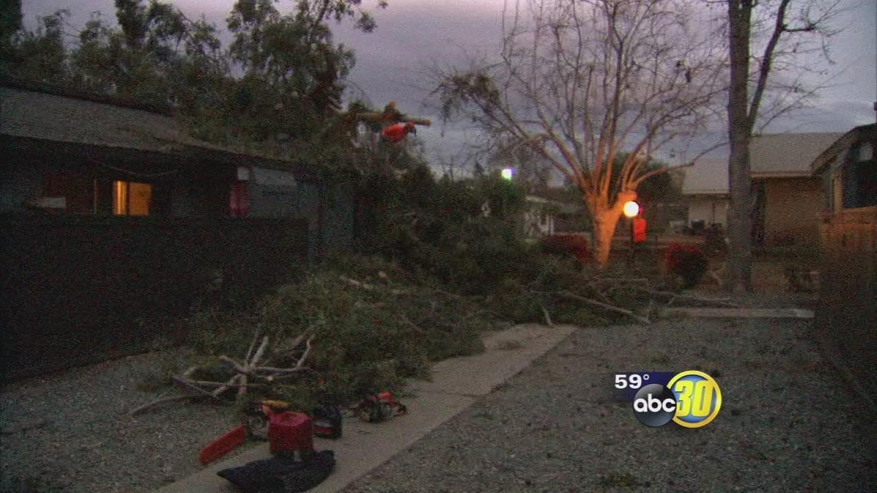 Strong winds topple trees in Fresno neighborhoods