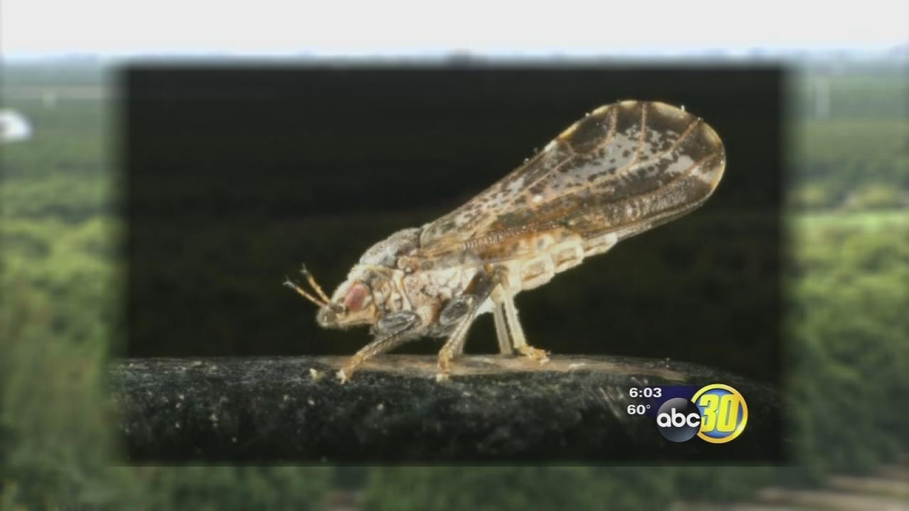 Homeowners being asked to be on the look out for a pest that can kill their trees