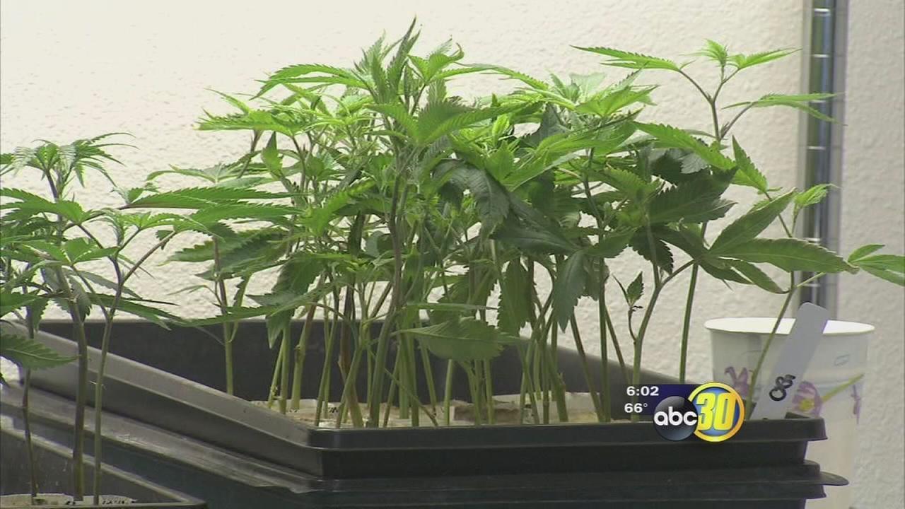 Fresno County debates acting on Coalinga?s progressive pot proposals