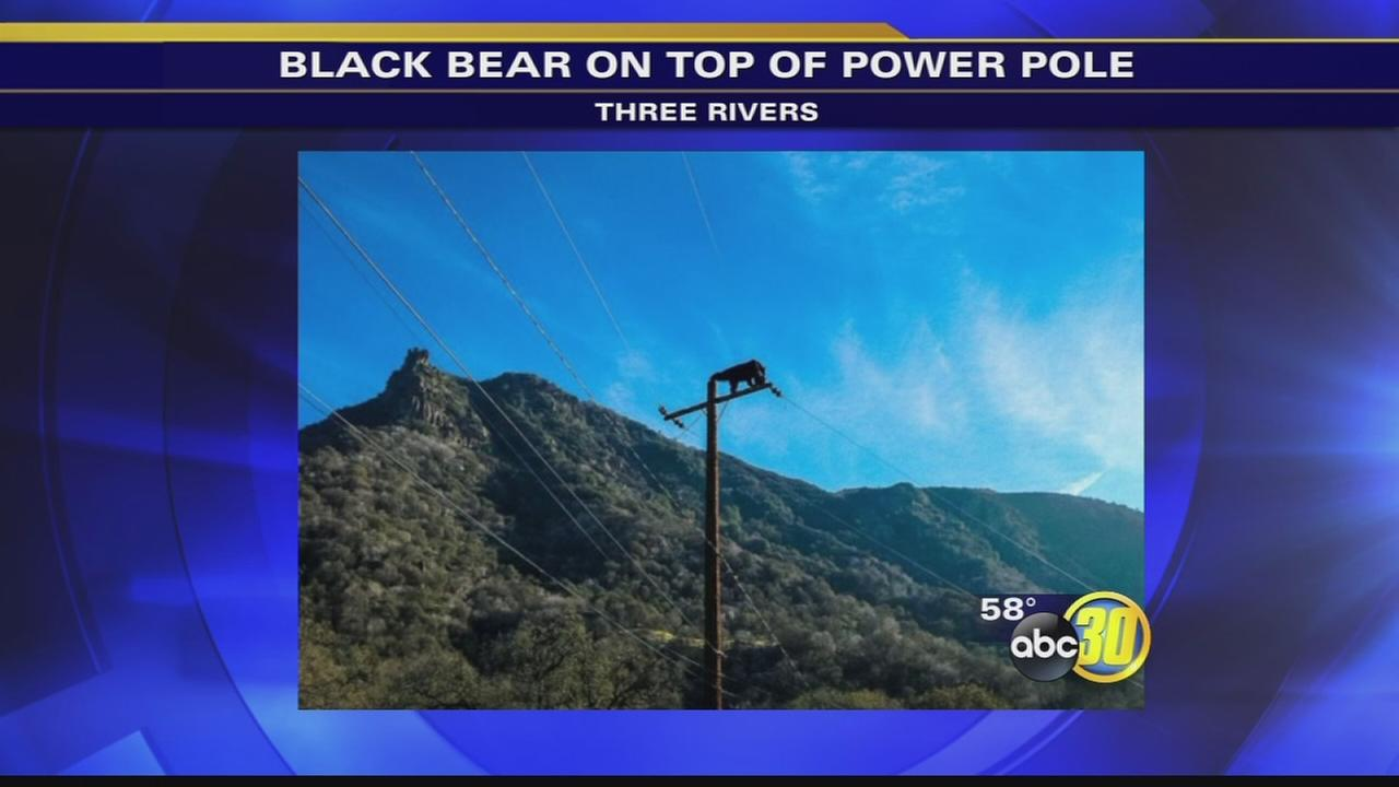 Black bear spotted on top of power pole in Tulare County