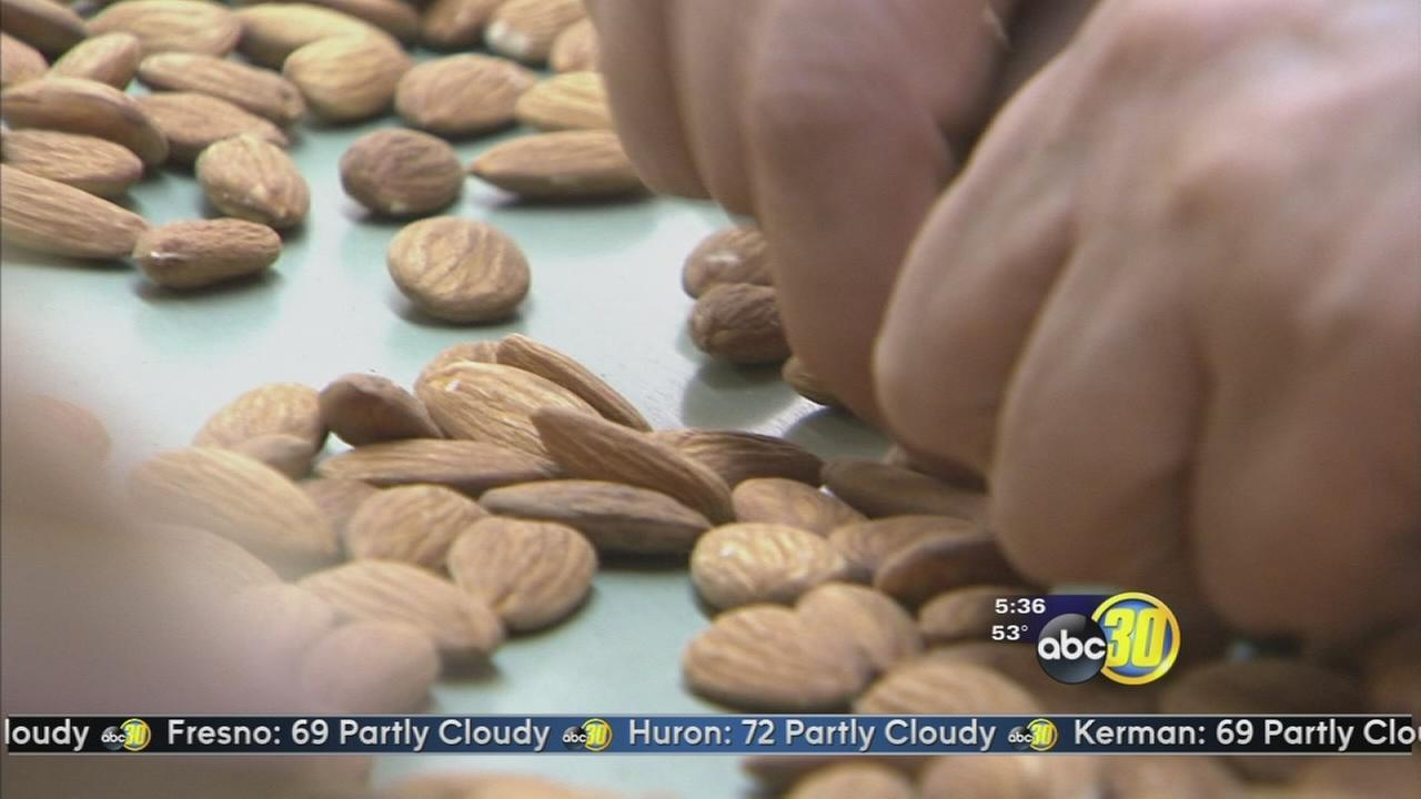 International crime rings targeting California almonds, walnuts