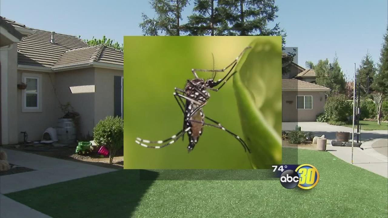 In wake of Zika Virus, Clovis preps for mosquito season