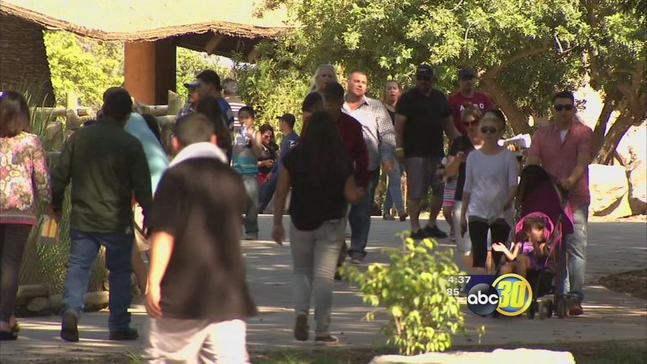 Warm weather and new exhibit resulting in record attendance for Fresno Chaffee Zoo