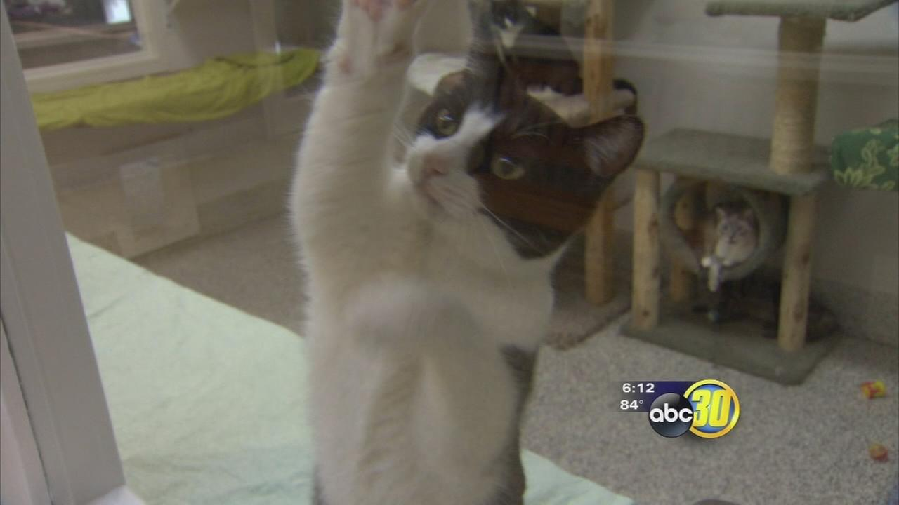 Valley Animal Center gearing up to host the Super Adoption event