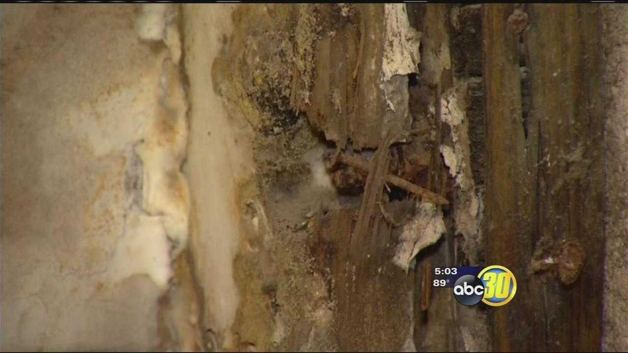 Hanford Police Department infested with termites