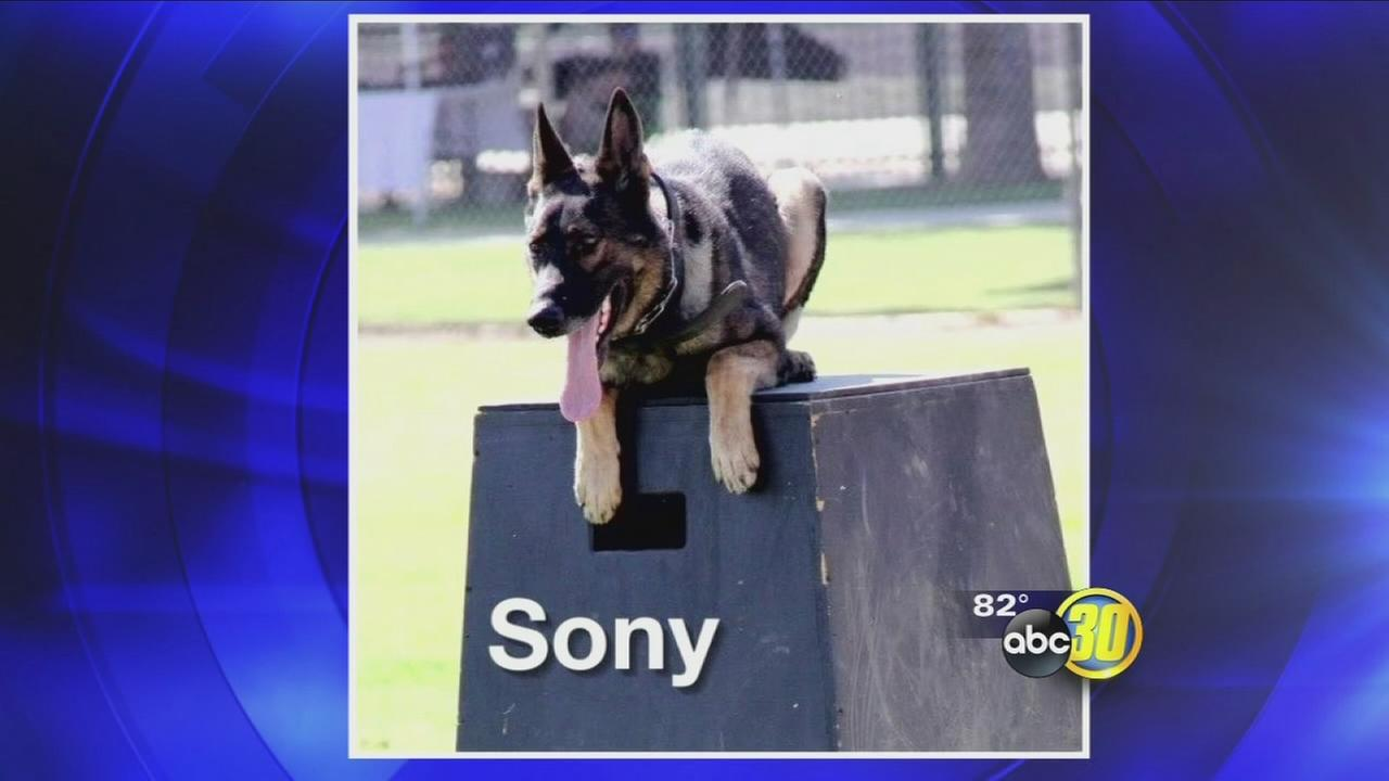 K-9 officer from the Fresno County Sheriffs Office passes away