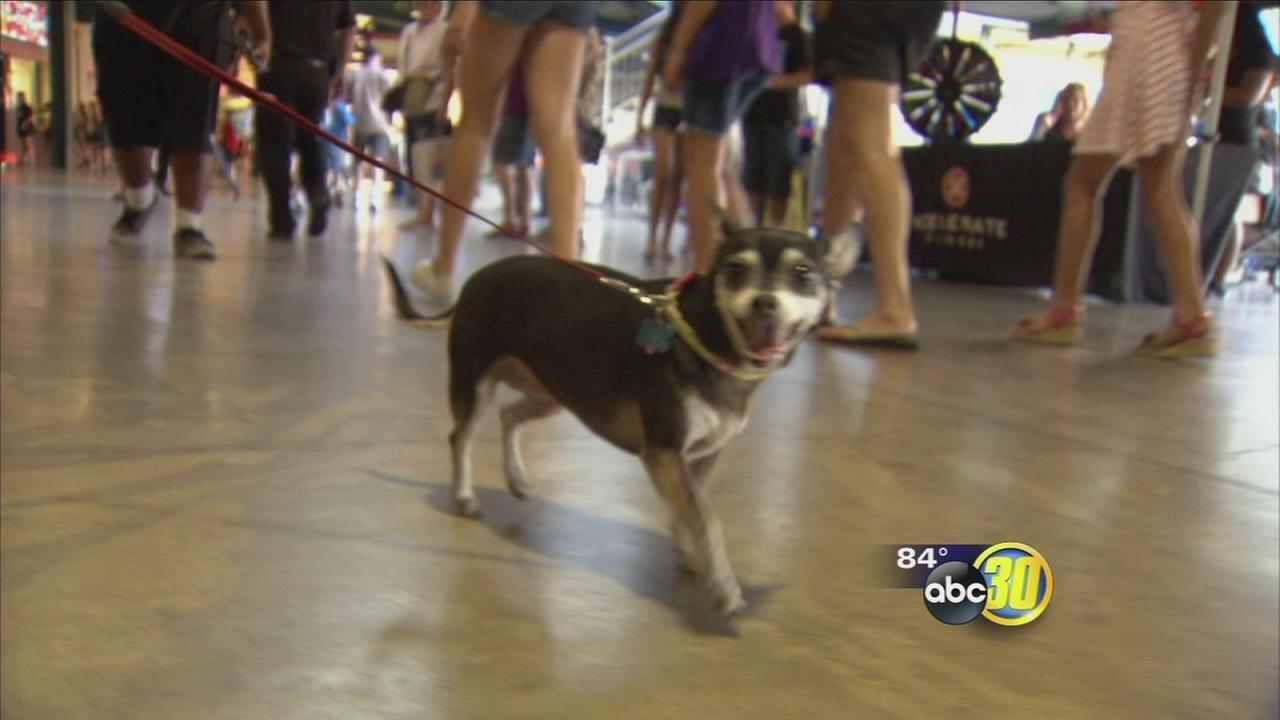 Furry Fresno locals woofed for the home team at Chuckchansi Park