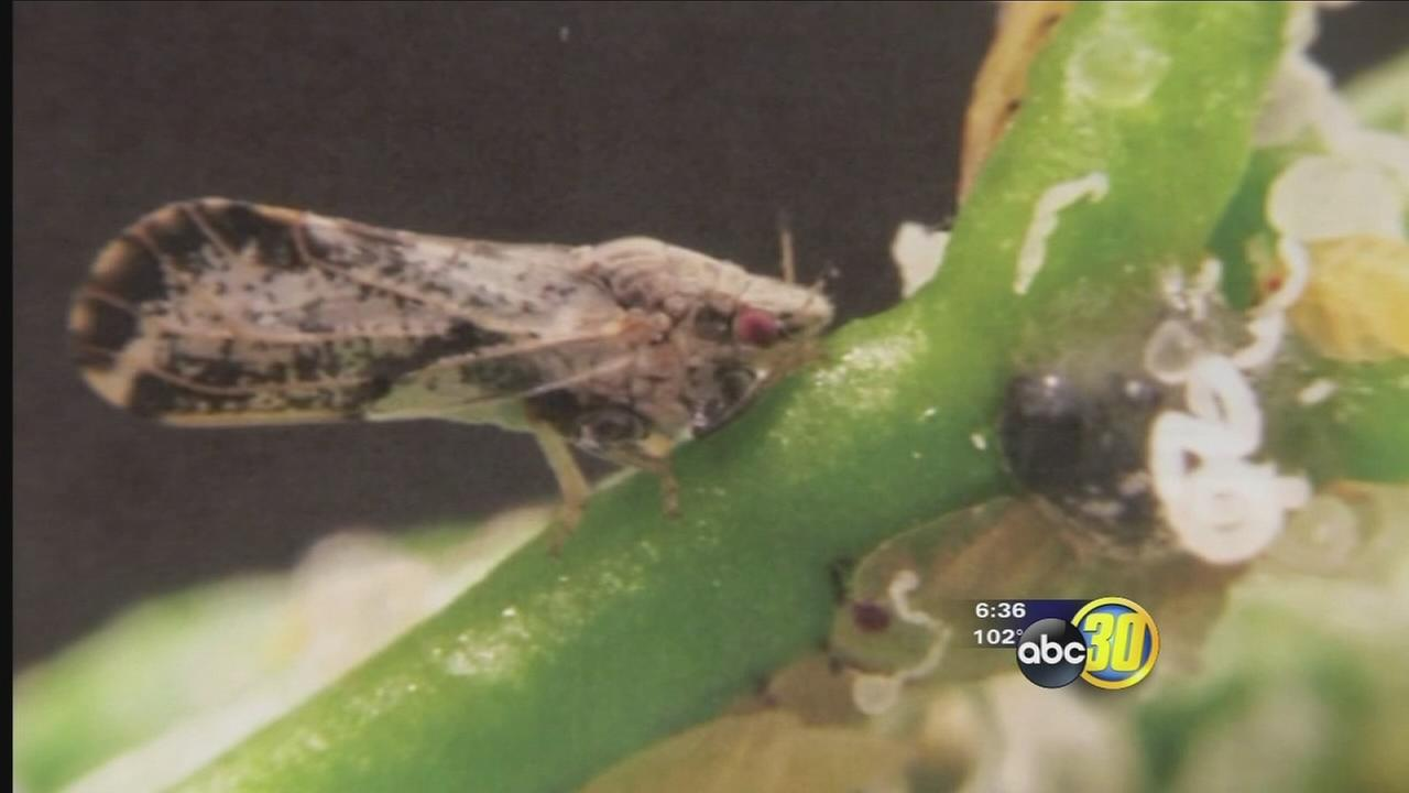 Quarantine in Merced County after the discovery of the Asian Citrus Psyllid