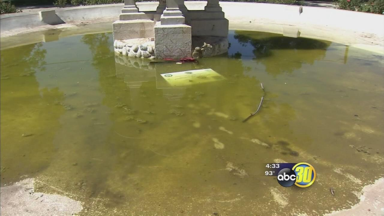 30 plants stolen and a fountain vandalized at Applegate Park in Merced