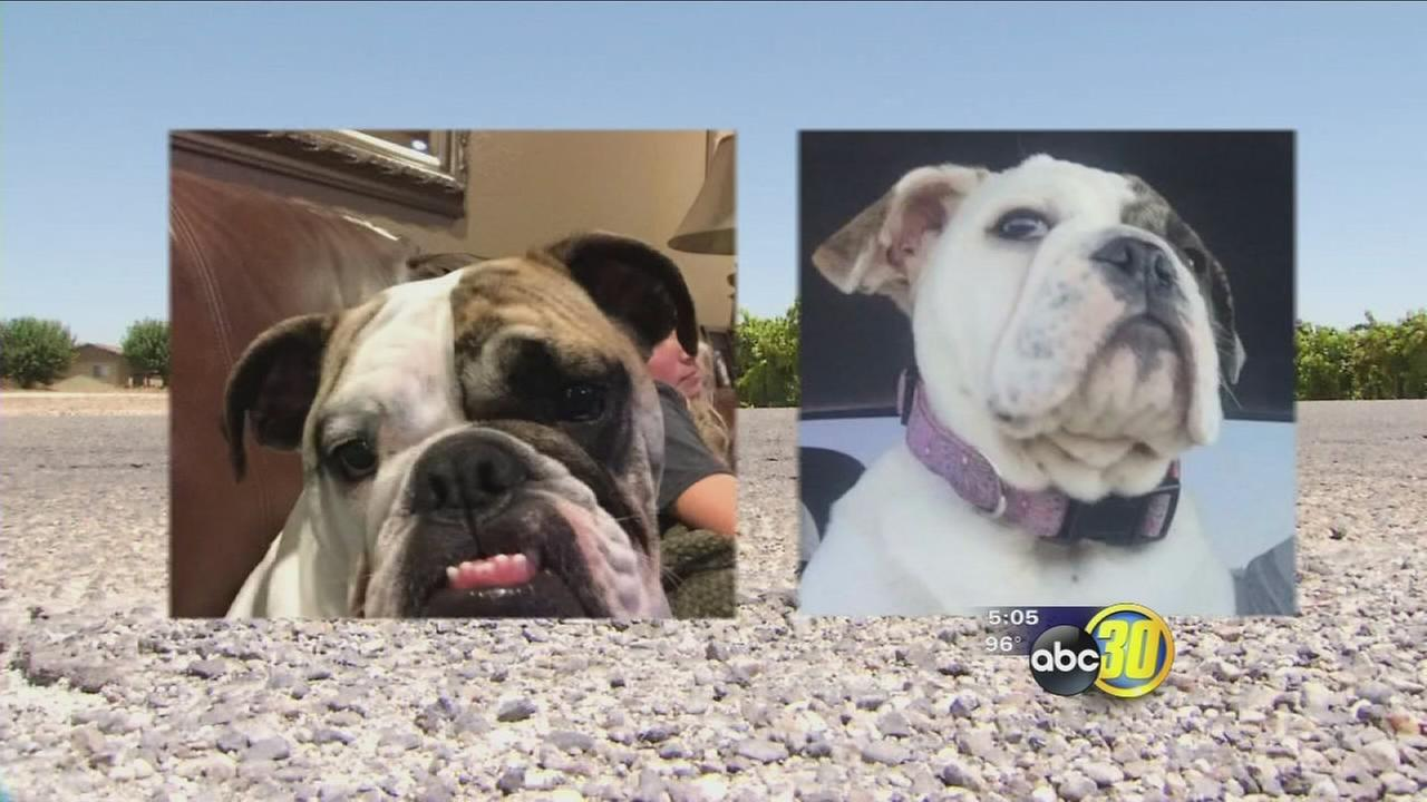 Burglars stealing dogs in Fresno County
