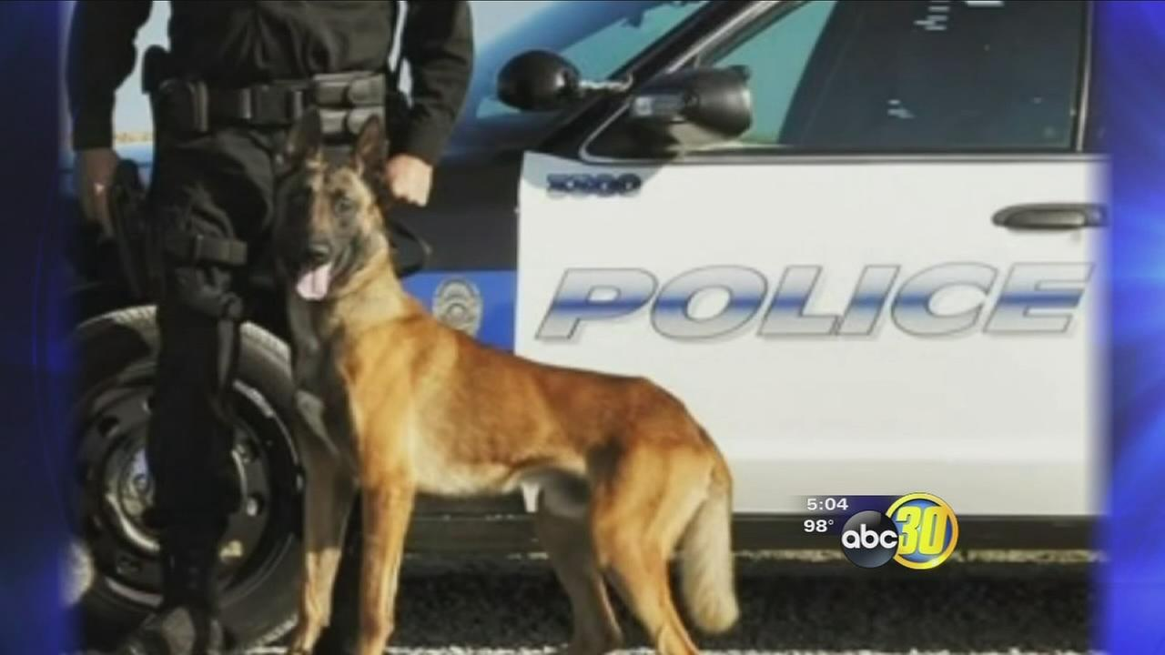 Porterville K-9 officer dies after car air conditioning fails