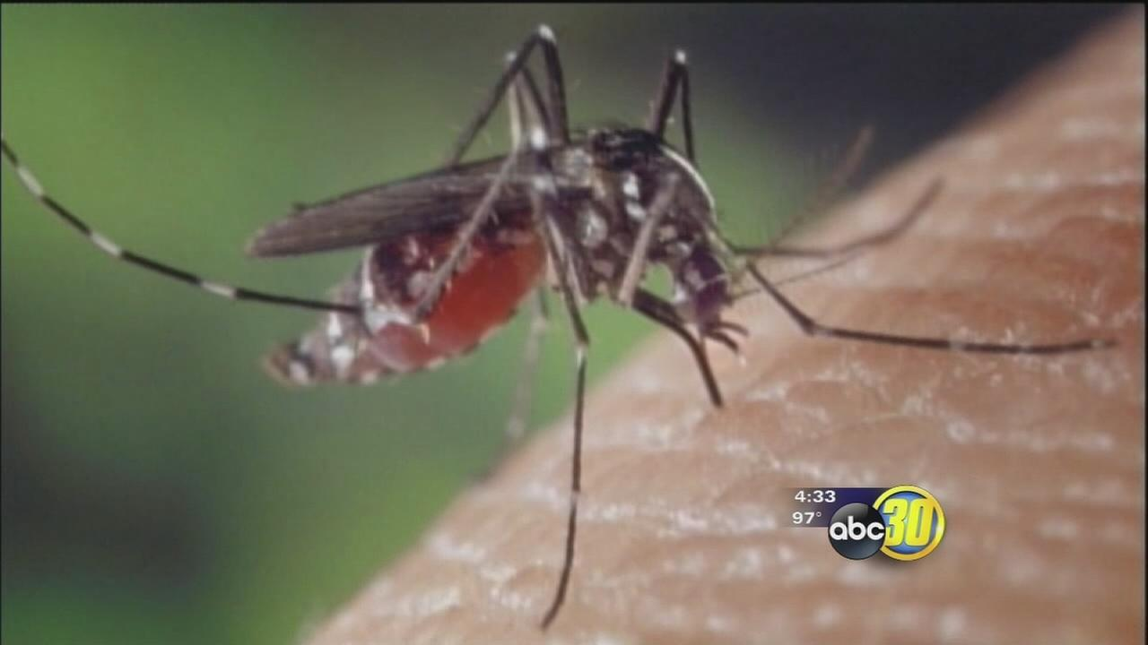 Merced County mosquitos found with West Nile virus