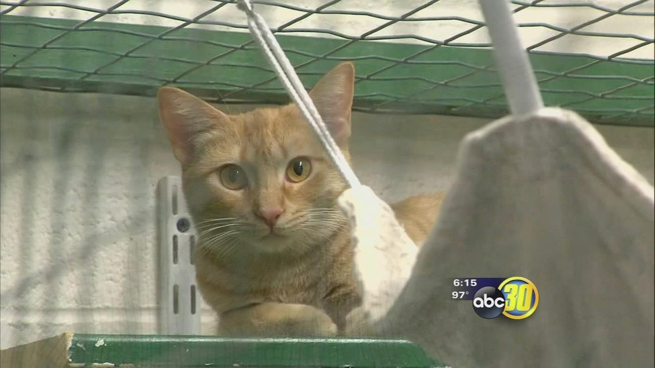 Kings County officials searching for solutions for feral cat problem