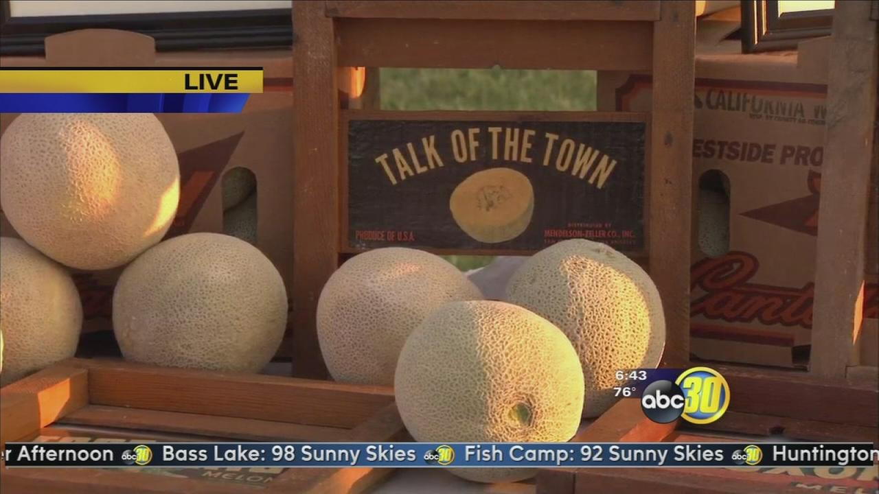 Annual Cantaloupe Roundup in Firebaugh