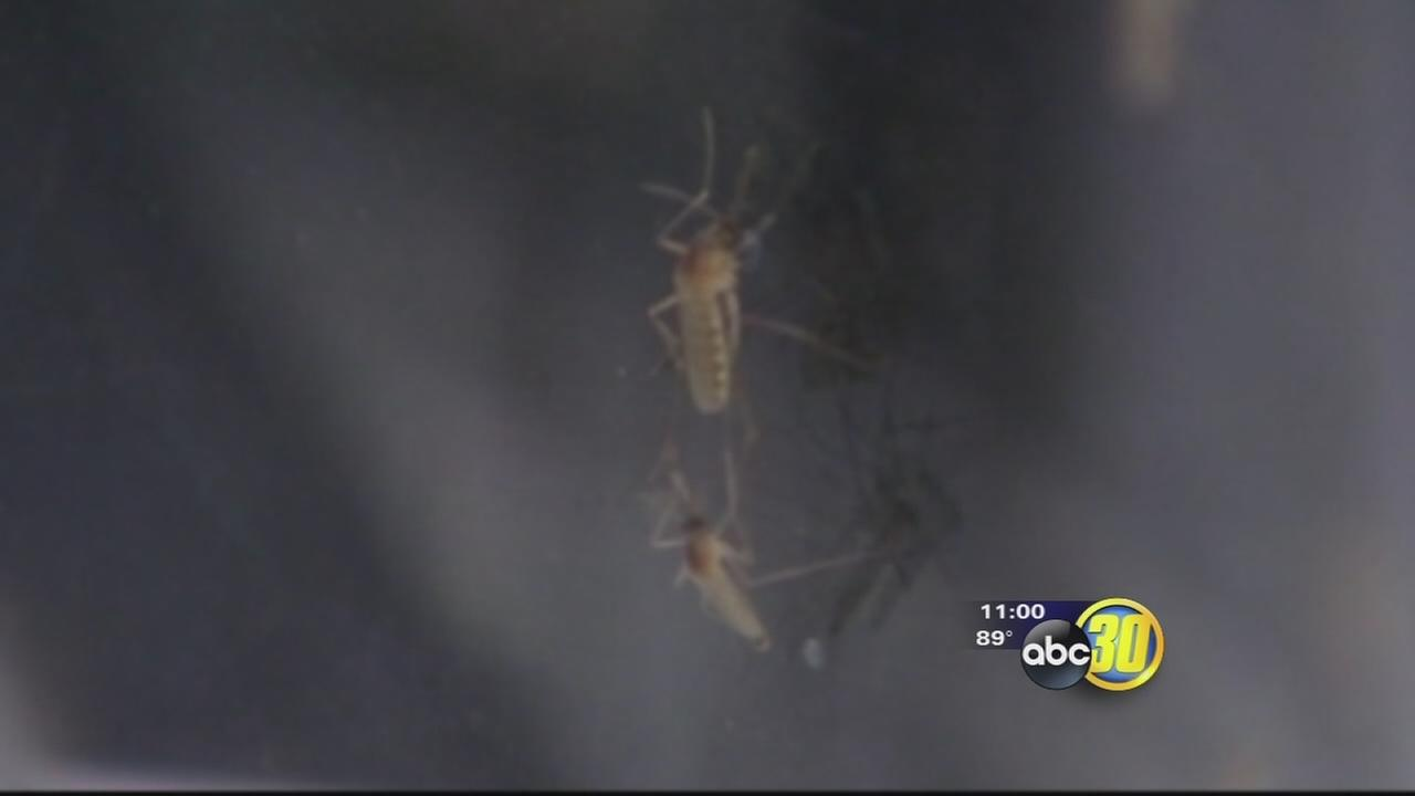 Fresno County West Nile Virus case confirmed by health department