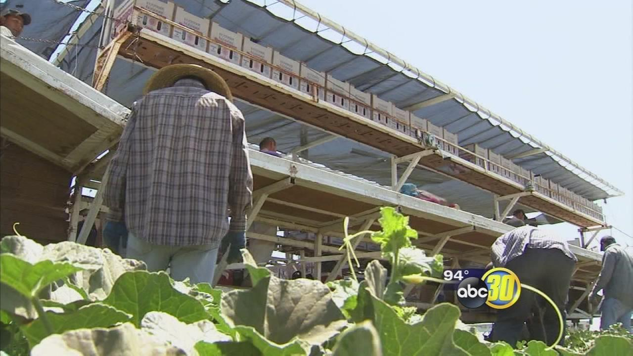 Death of 3 farm workers in Kern County may have been caused by the extreme heat