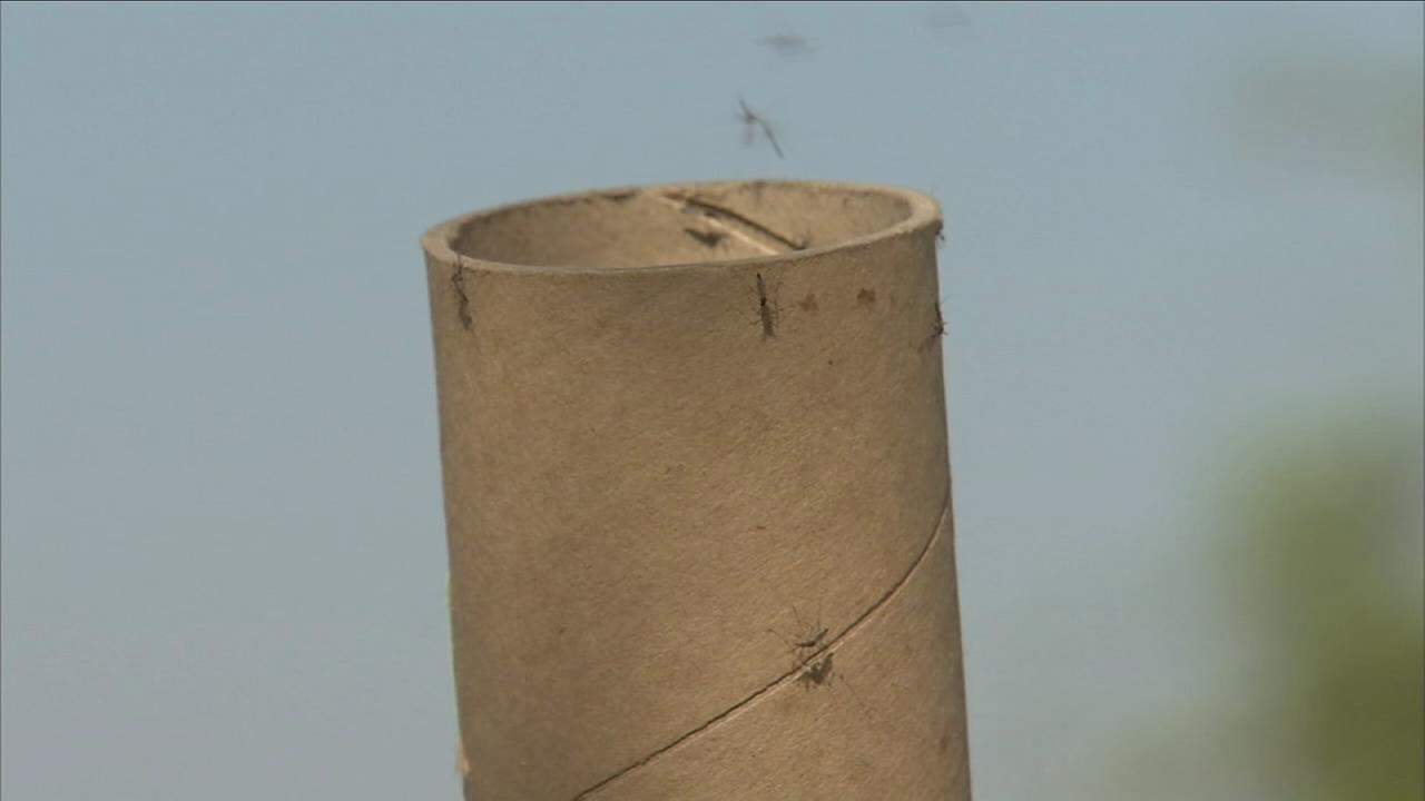 Thousands of mosquitoes released in Clovis as part of new effort to combat mosquito that carries Zika
