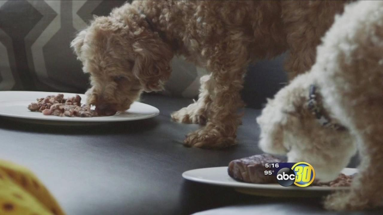 Pet menus for your pooch or cat on the go