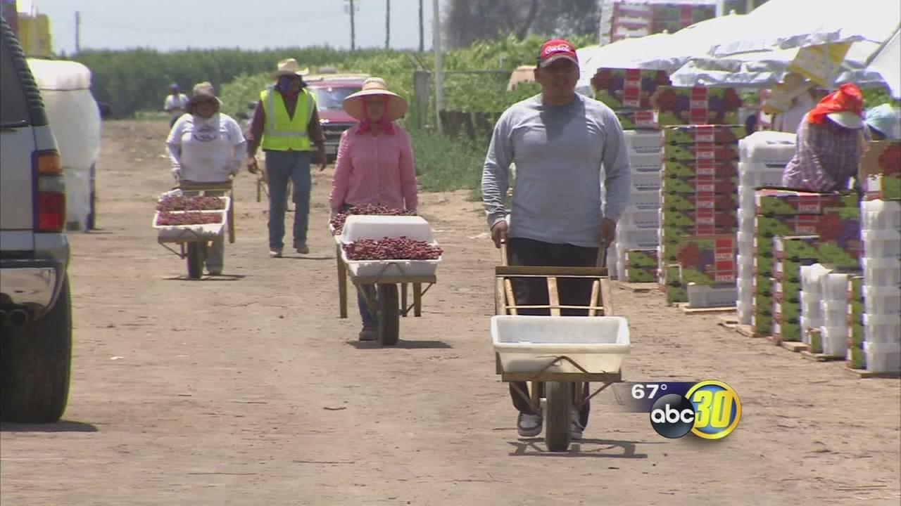 Valley farmer says overtime bill will hurt business, employees