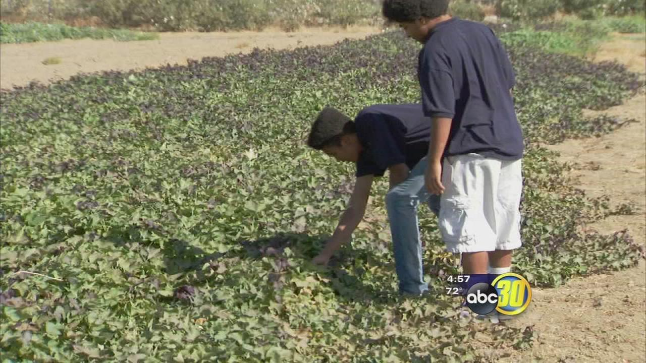 Southwest Fresno group and Fresno State partner up to give at-risk youth better future