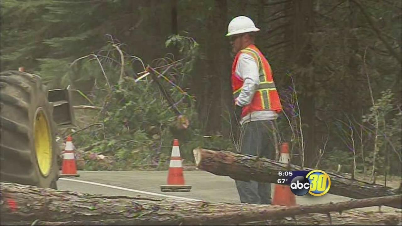 Thousands of dead trees along road to Yosemite to be cut down