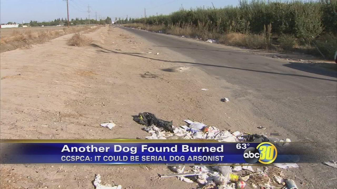 CCSPCA searching for possible serial dog arsonist in Fresno County