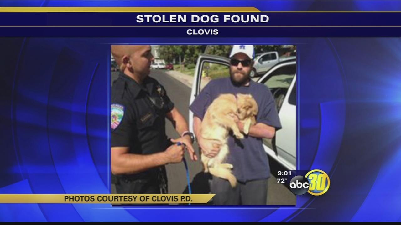 102216-kfsn-special-dog-theft-vid