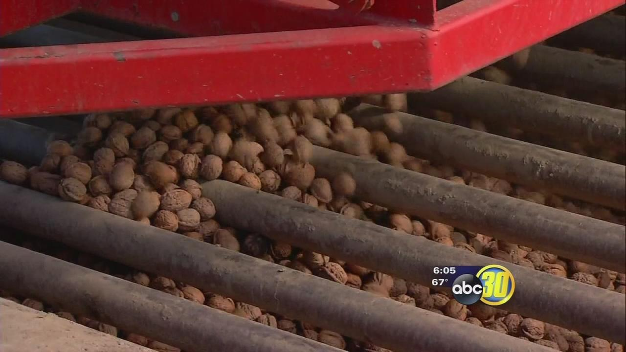 Last call for walnut sales in Tulare County starts
