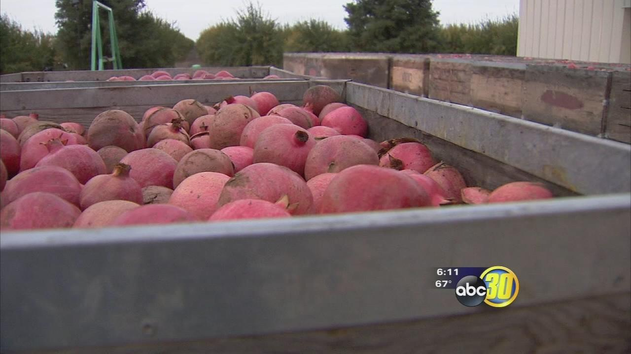 6th annual Pomegranate Festival takes over the Madera fairgrounds