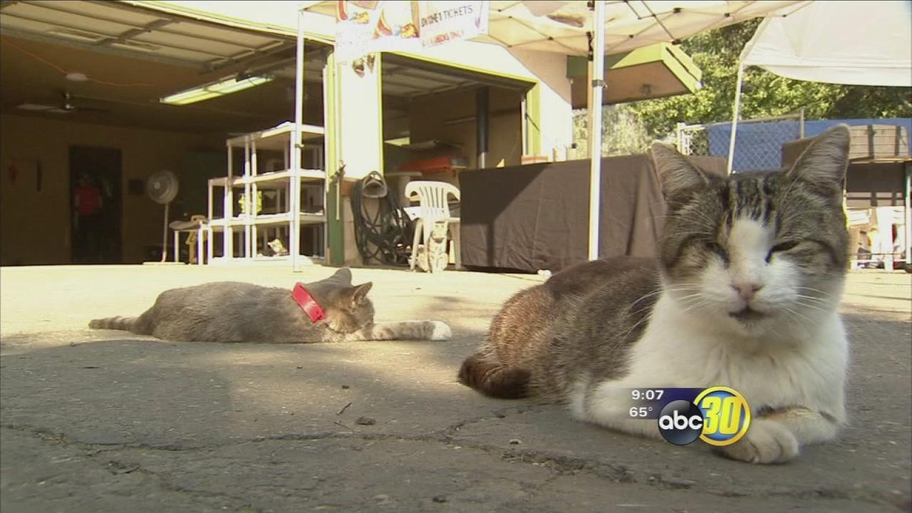 Cat House on the Kings holds open house fundraiser