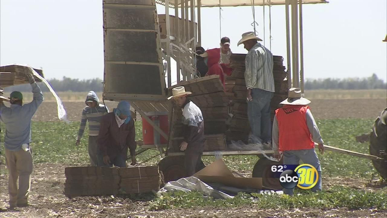 Central Valley farmers weighing in on how Trumps presidency might impact farming industry